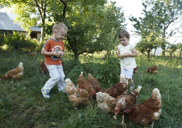 Otroški rojstni dan na eko kmetiji