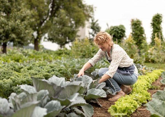 Organic adventure day on the Baron farm